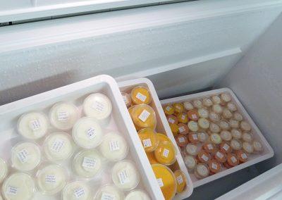 Atelier crèmes glacées